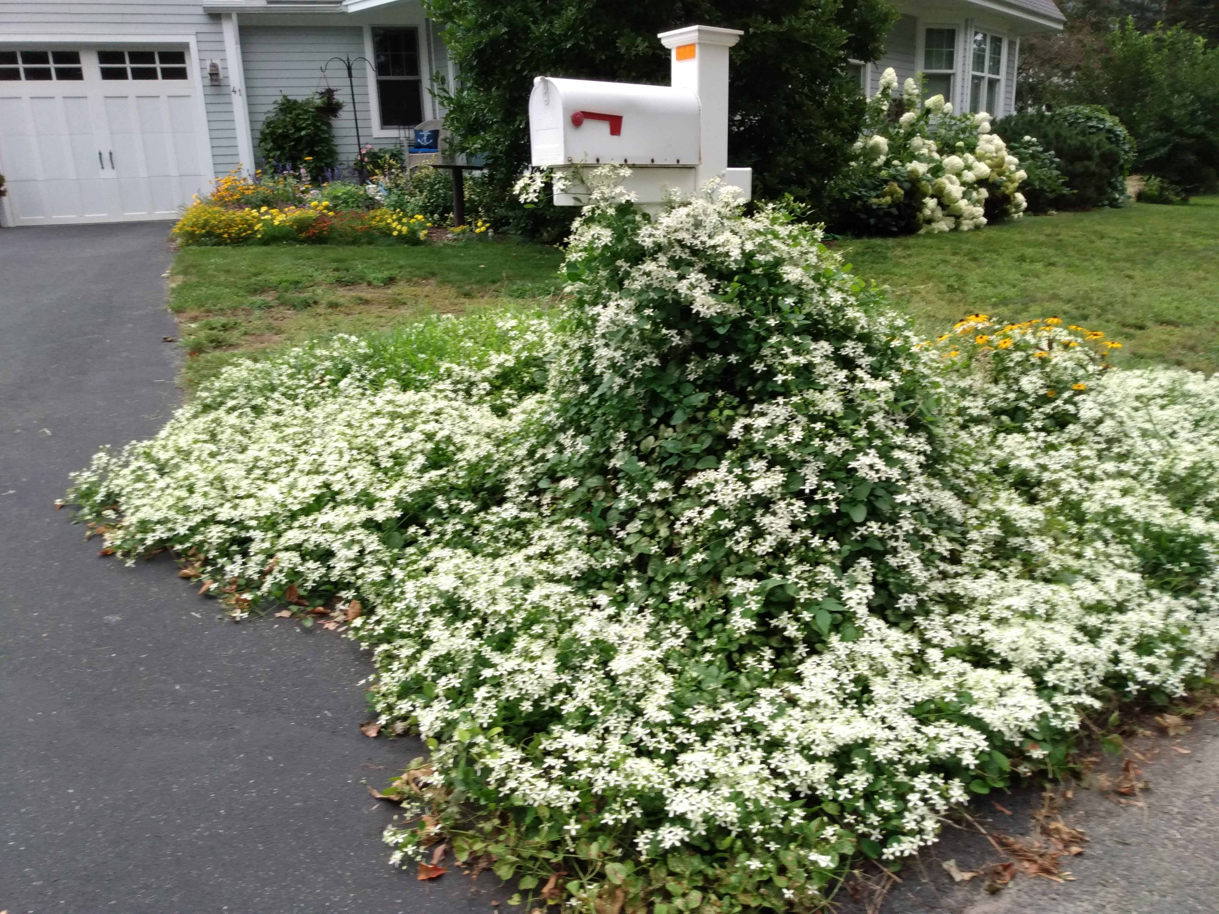 mailbox surrounded by white flowered vines