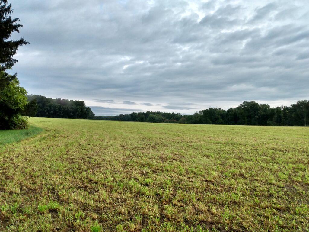 Mowed field and sky