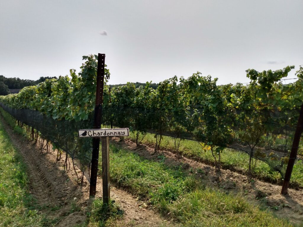 """rows of vines with a sign reading """"Chardonnay"""""""